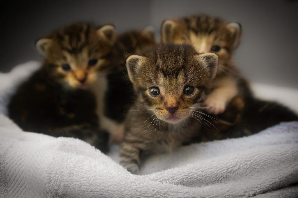 Kleine Katzen, leider noch nicht stubenrein